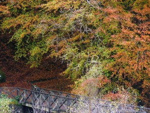 Bridge-at-Hafod