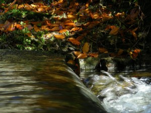 running-water-and-leaves