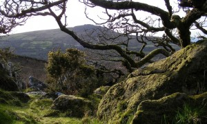 Ancient woods beneath Carn Ingli, Pembrokeshire